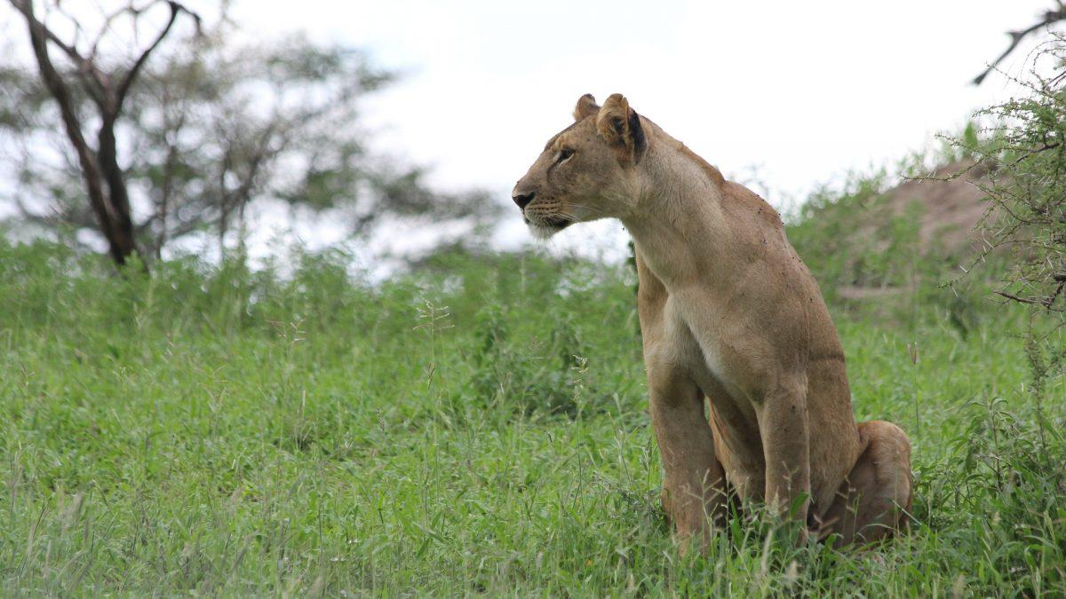 Un voyage en Tanzanie, une occasion de visiter des lieux remarquables