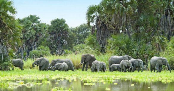 Par où commencer lors d'un voyage en Tanzanie ?