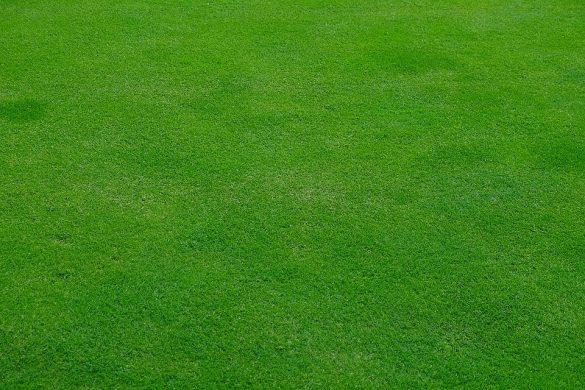Les raisons de choisir la tondeuse Greenworks Tools pour tondre son jardin
