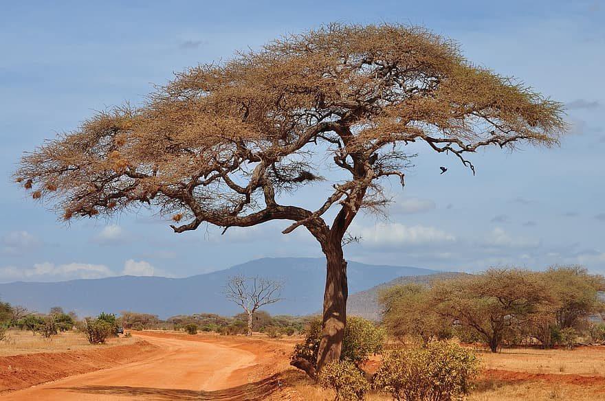 Bien se préparer à l'avance pour la traversée de l'Afrique en voiture
